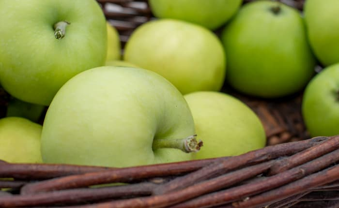 Closeup of pale yellowish green apples from the White Transparent Apple tree.