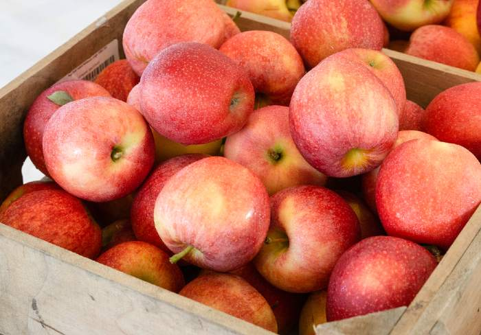 Top view of freshly picked red apples at Pennsylvania orchard.
