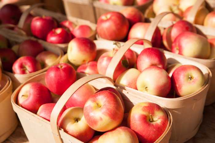 Fresh Baskets Of Apples from Farmers Market