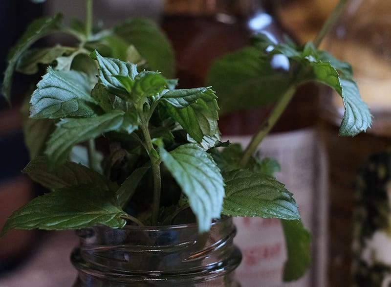 Closeup of stalks of mint in a glass jar.