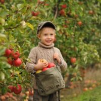 Young boy with a bag of apples picked at one of the best apple orchards in South Carolina.