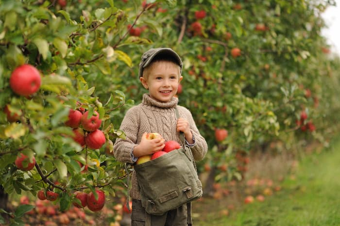 A young boy with a bag of apples picked in an orchard -- kids will love picking apples at the best apple orchards in South Carolina.