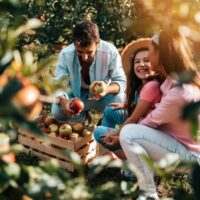 A family enjoying a day of apple picking is a great outing to one of the best apple orchards in Rhode Island.