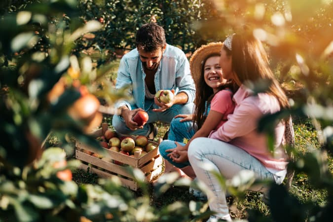 A family enjoying a day of apple picking together is a great outing at one of the best apple orchards in Rhode Island.