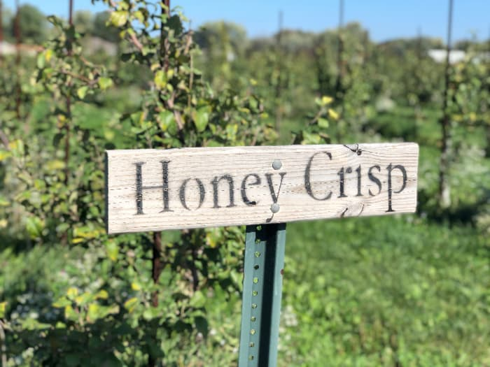 """A sign reading """"Honey Crisp"""" in an apple orchard -- Honeycrisp apples are just some of the wide variety of apples found in the best apple orchards in Indiana."""