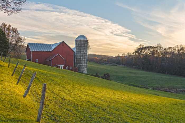 November Golden Hour At Ochs Orchard