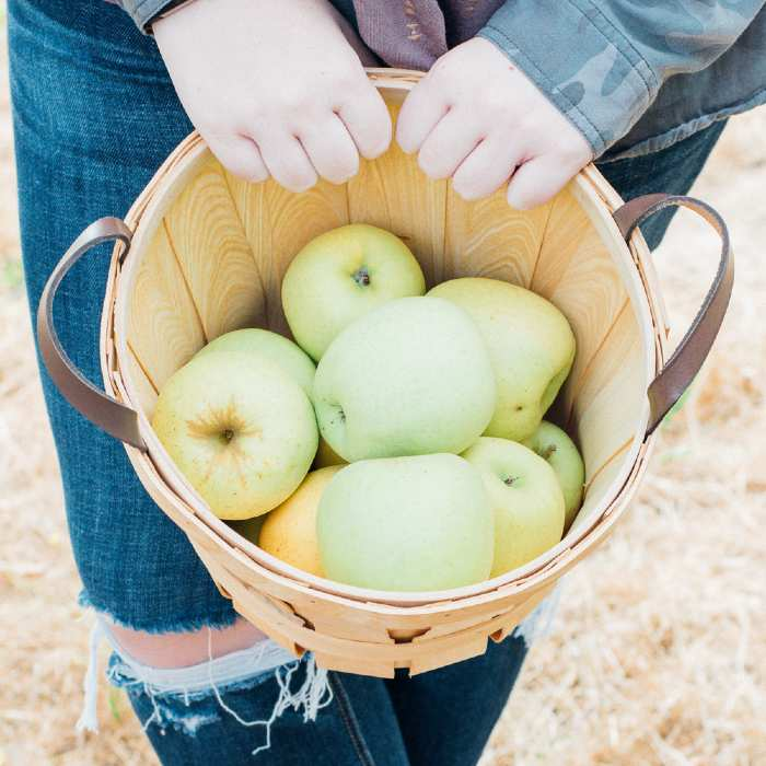 Picked apples in basket