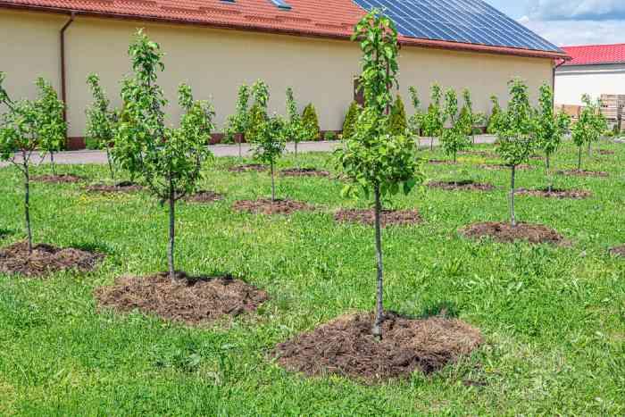 Grow an apple tree in a row