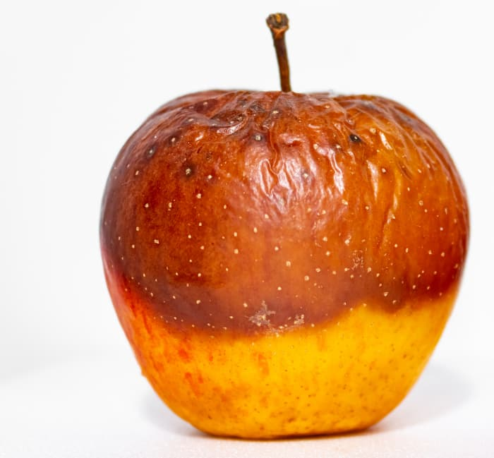 Closeup of a yellow apple infected with a light brown lesion that has a reddish colored edge -- an indication of the apple tree disease white rot.