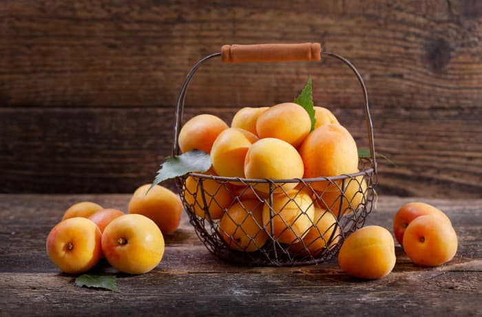 A brown wire basket with ripe, picked apricots in and around it.