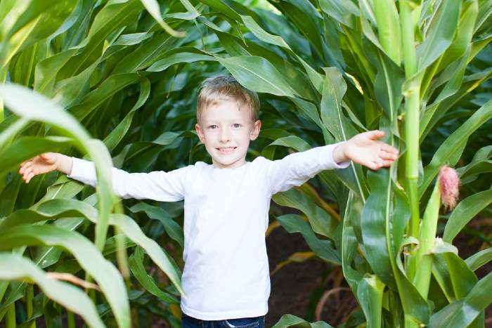 Young boy in corn maze