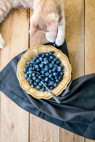 """Overheard view of a cat next to a plate of blueberries.  If you own a curious cat, you may wonder """"Can cats eat blueberries"""" and, even if they can, """"Should cats eat blueberries?"""""""