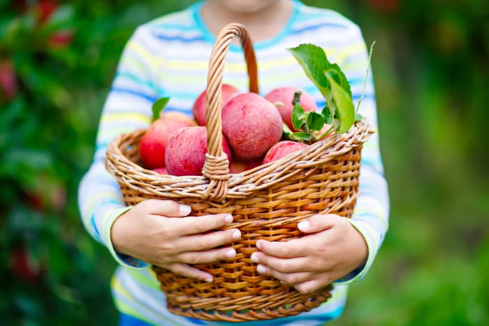 Child holding a basket of apples - Afton Apple Orchard is a great way to build family memories.