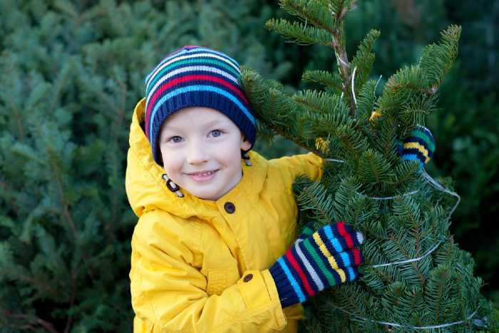 Boy choosing Christmas tree at market.