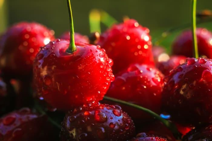Closeup of wet cherries .