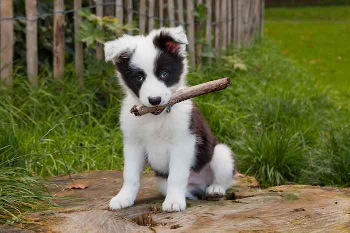 Cute Dog and a Stick