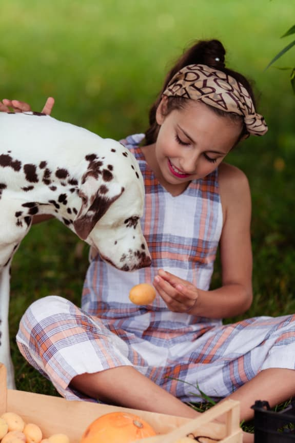Young girl offering an apricot to a Dalmation dog.