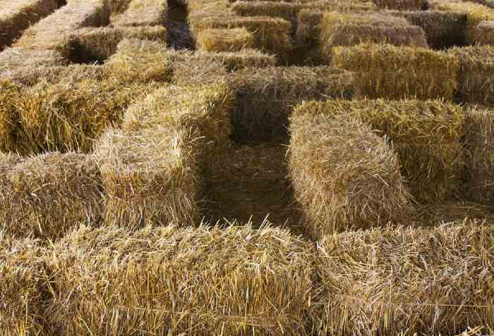 Hay bale maze at one of the best apple orchards in Minnesota