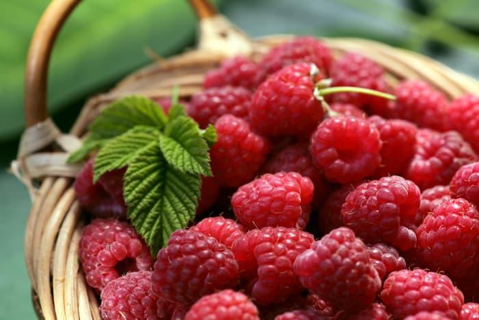 Closeup of picked raspberries in a basket.