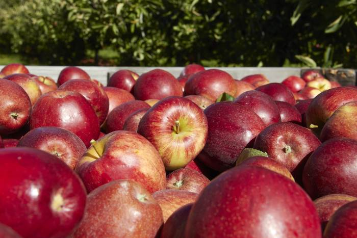 Red apples in crate