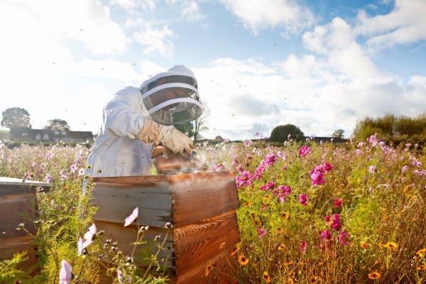 Plant wildflowers to attract bees