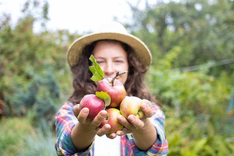 Woman holding freshly picked apples.