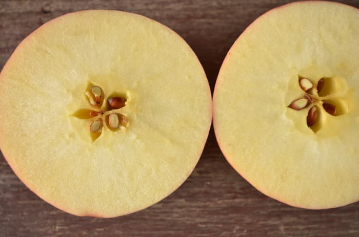 Closeup of the interior of a cut, ripe apple.  White, creamy flesh and brown apple seeds are signs that it's the right time to pick apples.