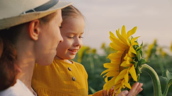 Closeup of a woman holding a little girl up to see a large sunflower.  Wild sunflowers make for a great photo op at LuceLine Orchard.