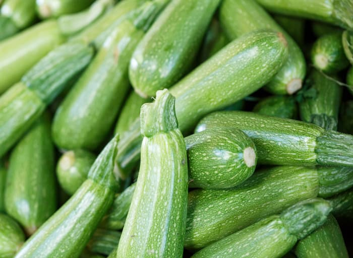 Closeup of a pile of zucchini squash.  Spineless Perfection is a zucchini variety you can find at Gilby's Orchard.